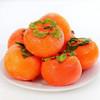 HUABEIQIANG 華北強 头茬新鲜火晶柿子 5斤装(大果)