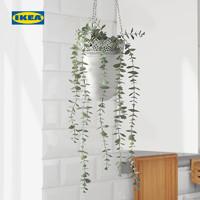 IKEA宜家FEJKA菲卡人造盆栽植物桉樹