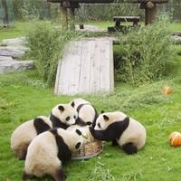 百亿补贴 广州长隆野生动物园门票满122-121元优惠券,1元抢购