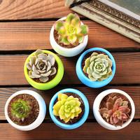 自然萃 多肉植物组合盆栽花卉肉 随机3盆