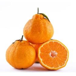 四川 不知火丑橘 10斤