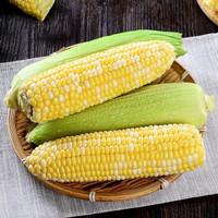 豫淮农场 生吃水果玉米 5斤