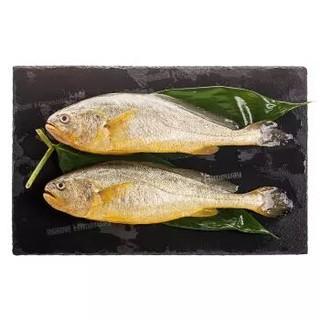 海名威 国产鲜冻黄花鱼(宁德大黄鱼)700g 2条 袋装 生鲜海鲜水产 鱼类 *4件