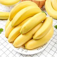 俏孔雀 云南高山香蕉 新鲜水果 整箱10斤(净重8.5-9斤)
