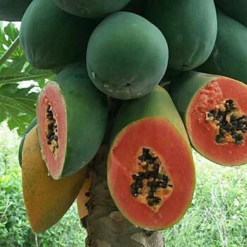 广西红心木瓜牛奶冰糖大木瓜新鲜水果特产当季鲜果 9斤