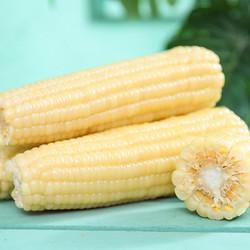 科冠 真空即食玉米 10个装
