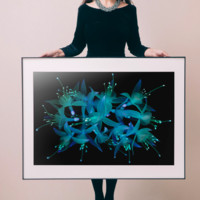 PICA Photo 拾相记 米歇尔·冈特内 作品《吊钟海棠》28 x 33 cm 收藏级影像工艺 50版