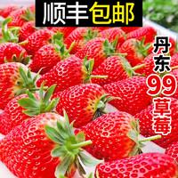 丹东99牛奶草莓新鲜草莓