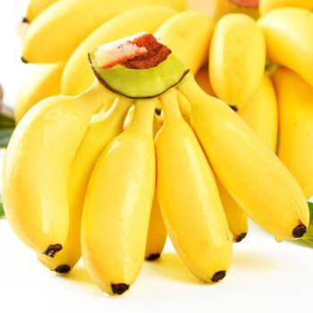 广西香甜小米蕉当季新鲜水果皇帝蕉