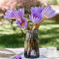 移动专享:FOLOMODO 基地速递紫色睡莲 10朵