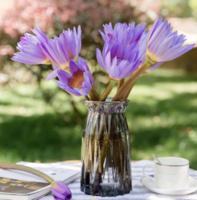 FOLOMODO 基地速递紫色睡莲 10朵