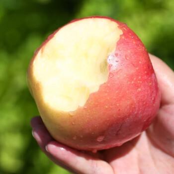 陕西红富士冰糖心苹果 5斤 *2件