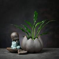 燚窑   绿萝水培植物花瓶  坐莲-轻语小僧+不含植物