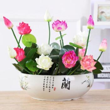 移动专享:香昔庄园 四季盆栽绿植花卉(混色30粒+盆+液+泥+买1发1)