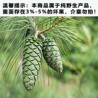 云南特产 新鲜野生松子薄壳落水松籽坚果仁生原味松子不开口500克