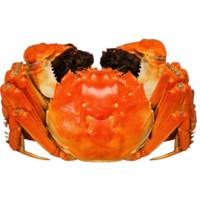 蟹之侣 大闸蟹 全母2.0两 10只