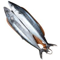 鲜优虹 舟山整条鲜活海捕马鲛鱼 1500g