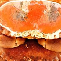 京东PLUS会员:鲜味时刻 面包蟹熟冻螃蟹 1600-1200g(2只)