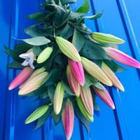 移动专享:水养百合鲜花 花束10朵 送保鲜剂