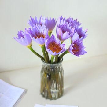 移动专享 : 鲜花花束紫色睡莲 10枝装