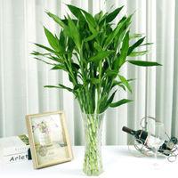 移动专享:奕通 水培植物富贵竹 60cm 20棵
