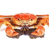 无敌小蟹蟹 鲜活大闸蟹 裸重精品公蟹 2.8-3.1两 8只