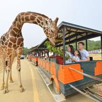 5折优惠!速来!杭州野生动物世界 成人票