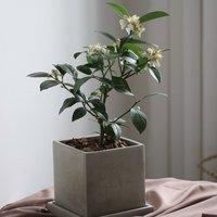 每日一牌:DEAR PLANT亲爱的绿植,颜值党的春天从一盆绿植开始吧~