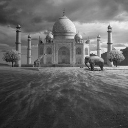 波兰艺术家 Tomasz Zaczeniuk 作品《象》The Elephant