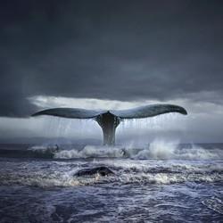 《蓝鲸》 Tomasz Zaczeniuk 托马什·扎切纽克 作品