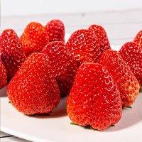 珍莓好 丹东99 牛奶草莓 头茬大果现货 3斤