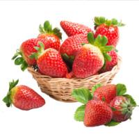 京东PLUS会员: 田园居 天仙醉奶油草莓 3斤中大果