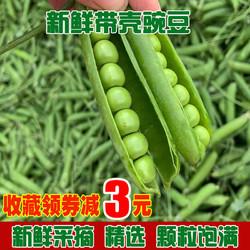 云南新鲜青豌豆甜脆豌豆
