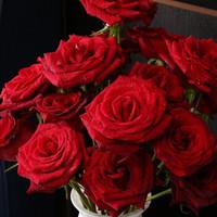 璞郁舍(PYS)玫瑰鲜花 品级 罗德斯黑魔术 10朵