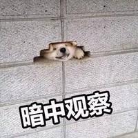 20日0点、促销活动:京东 滔搏运动官方旗舰店 年货节专场