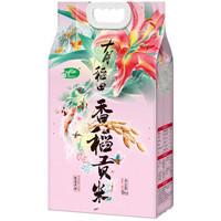 十月稻田 香稻贡米 东北大米 5kg+牙线50根