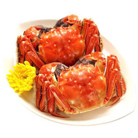 京觅 大闸蟹 公蟹3.8-4.1两 母蟹2.3-2.6两 5对10只 *2件