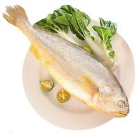 京东PLUS会员:鲜味时刻 大黄花鱼 500g *3件