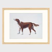 季大纯 动物系列 客厅装饰画 简约现代 挂画  装裱尺寸:54×45cm
