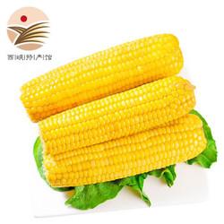 东北甜糯黄玉米 250g*10根