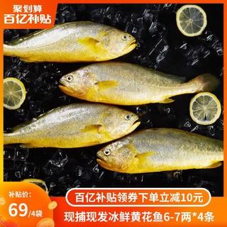 三都港现捕现发冰鲜黄花鱼4条装 大黄鱼黄鱼海鲜新鲜生鲜冷冻水产