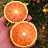 京东PLUS会员:沃多鲜 四川塔罗科血橙  带箱9斤大果(单果65mm以上)