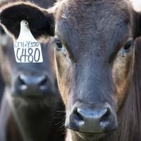 """牛排中的""""爱马仕""""——澳洲Blackmore牧场M9级别谷饲西冷牛排"""