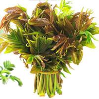当季新鲜香椿芽 自然生长头茬香椿 2斤装