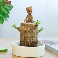 致荟树 巴西木水培植物 直径5cm(巴西木+暖白盆+格鲁特)