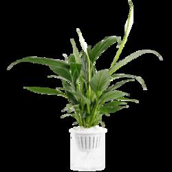 多种盆栽绿植可选