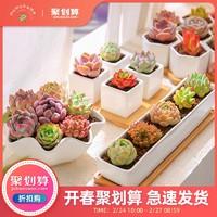 云南多肉植物组合套餐室内小花卉植物盆栽桌面肉肉植物送花盆工具
