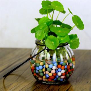 若绿 盆栽套装 铜钱草 吊环南瓜瓶