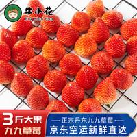 丹東99草莓 紅顏奶油大草莓 久久丹東草莓 產地直發 新鮮水果現摘現發 3斤大果