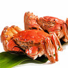 御鲜之王 大闸蟹鲜活现货生鲜螃蟹礼盒 海鲜水产 全公蟹3.4-3.7两/只  3只